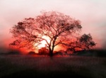 Sunset through tree of life