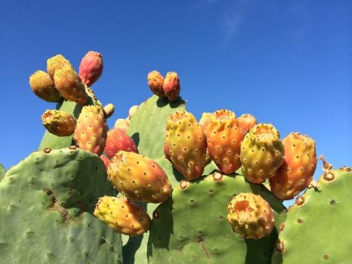 cactus-greece